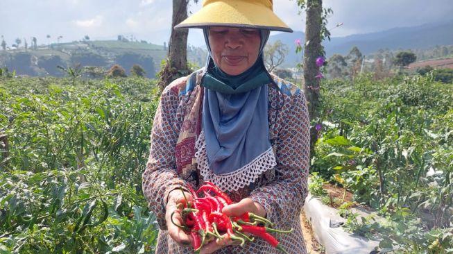 Jawa Barat Kehilangan 100 Ribu Petani, Ahmad Hidayat: Program Petani Milenial Jadi Solusi Ketahanan Pangan