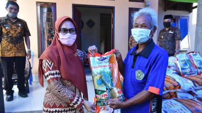 Bupati Indah Putri Indriani Salurkan Bantuan Benih Jagung Senilai Rp.2 Miliar ke Petani Luwu Utara