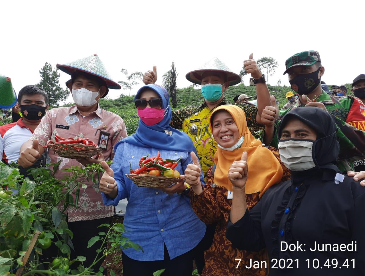 Harga Cabai Meroket, Teti Rohatiningsih Panen Raya di Dusun Cibahu Palugon