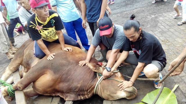 Potong 5 Ekor Sapi, Golkar Kalteng Bagikan 700 Paket Daging Kurban Ke Masyarakat Palangkaraya