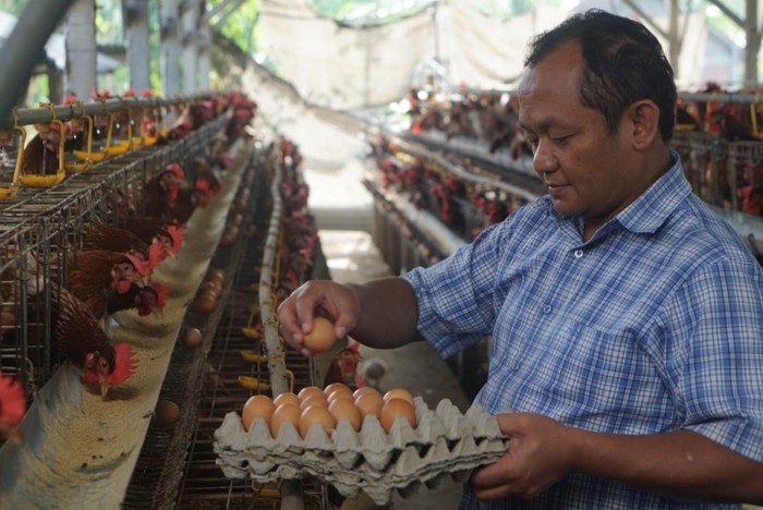 Lindungi Peternak Rakyat, Ketua Golkar Jatim Sarmuji Usulkan BUMN Khusus Kelola Pakan Ternak
