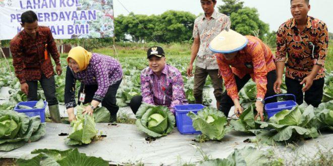 Bersama Koperasi BMI, Bupati Ahmed Zaki Panen Kol dan Oyong di Kampung Blukbuk Luwung