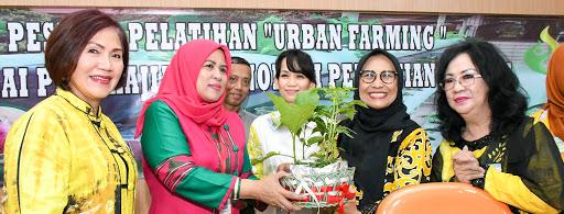 Hobi Hidroponik Hetifah, Ribuan Lubang Tanam Siap Sajikan Sayuran Organik Untuk Keluarga