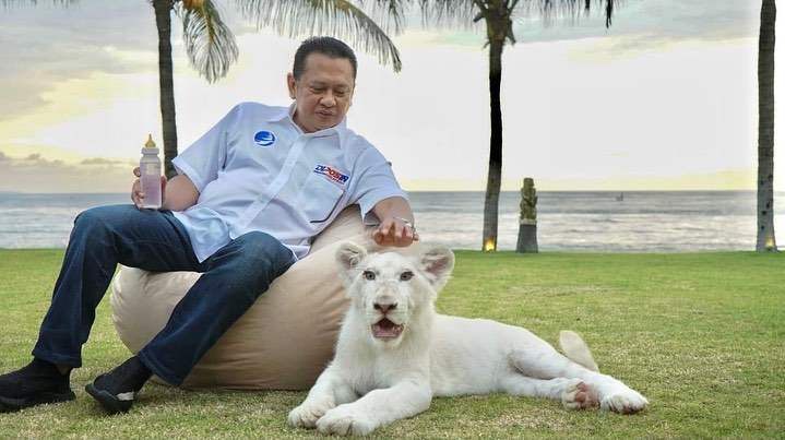 Dikritik Melanie Subono Soal Kepemilikan Simba si Singa Putih, Ini Penjelasan Bamsoet