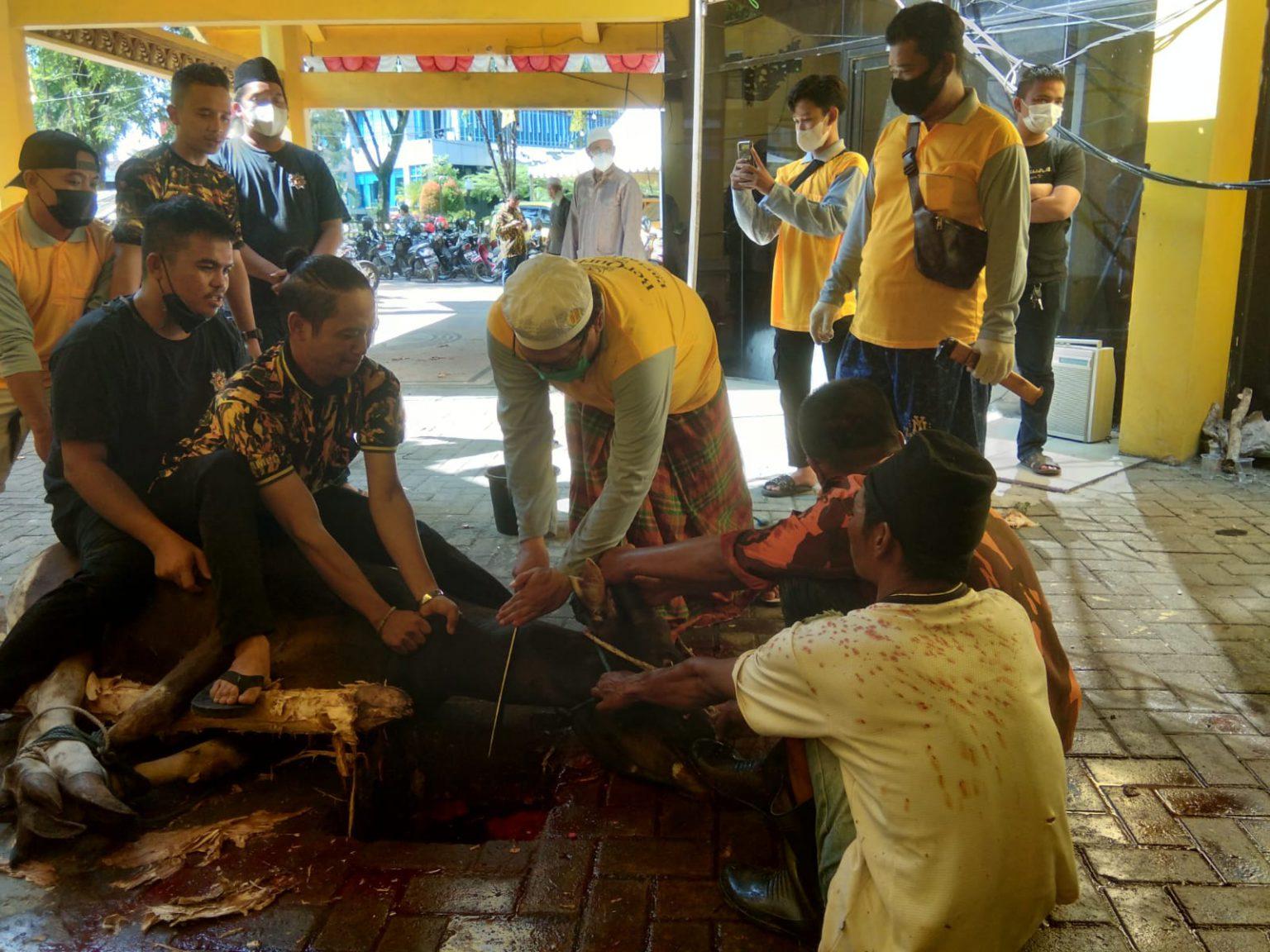 Sembelih 12 Ekor Sapi Kurban, Golkar Kalsel Bagikan Daging Untuk Masyarakat Banjarmasin