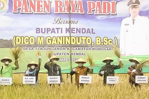 Panen Raya di Kendal, Bupati Dico Ganinduto Gandeng Bulog Serap Gabah Petani