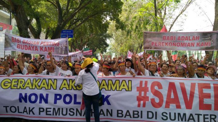 Aksi #SaveBabi, Viktor Silaen Pastikan Tak Ada Pemusnahan Babi di Sumut